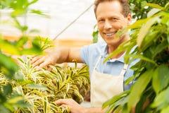 Man gardening. Stock Photo