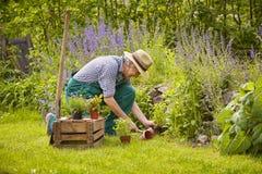 Man gardening. Kneeling planting with plants Royalty Free Stock Photos