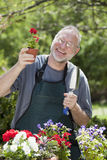 Man Gardening Outdoors. Man smiles at the camera while gardening with potted plants outdoors Royalty Free Stock Photos