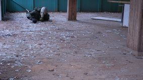 A man in a gas mask crawls and dies. Hd stock footage
