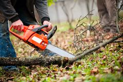 Man with gasoline powered chainsaw cutting fire wood from trees. In forest Royalty Free Stock Photo