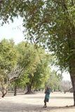 Man Gathering Tamarind Stock Images