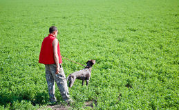 Man with german pointer in the field Royalty Free Stock Photography