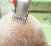 A man gets a haircut in the barber shop. Hairdresser cutting the client`s hair in the salon. Elderly hair close-up. Stock Image