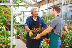Man getting apprenticeship in nursery shop. Young men getting apprenticeship in nursery shop helping a gardener stock image