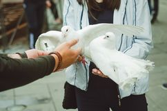 The man gives the girl two white doves in his arms. Entertainment for tourists in the city of St. Petersburg. royalty free stock images