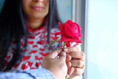 Man Gives a Red Rose to a Woman.  Royalty Free Stock Photo