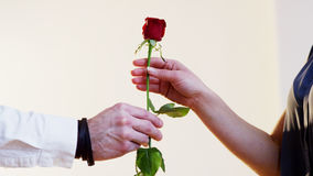 Man Gives a Red Rose to a Woman Stock Photos