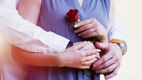 Man Gives to a Woman a Rose. She Holds His Hand Stock Image