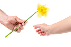A man gives the woman a flower Stock Images