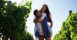 Man giving piggy back to woman in the wine farm. On a sunny day stock video footage