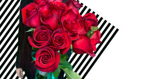 Man is giving red roses. Bouquet isolated on striped background Royalty Free Stock Image