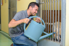 Man giving water to dog Stock Photo