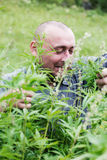 Man with glasses. In the bush of hemp Stock Photography
