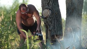 Man in glasses with chainsaw sawing a dry tree Stock Photography