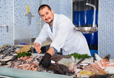 Man in glove behind counter shows fish in his hand Royalty Free Stock Images