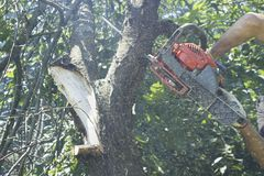Man in gloves cutting tree with a chainsaw in a garden. Background stock image
