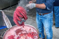Man in gloves holding red octopus ready to boil. Unrecognizable man holding red octopus above pot with boiling water royalty free stock photo