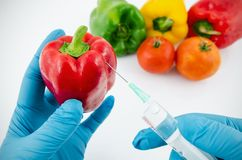 Man with gloves working with pepper in genetic engineering lab. Oratory. GMO food concept royalty free stock image