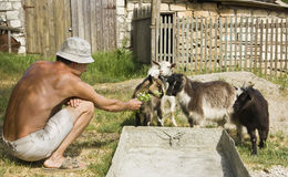 Man with goats Royalty Free Stock Image