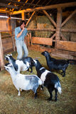 Man With Goats About to Play a Joke Stock Image