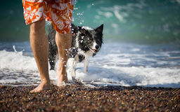 The Man Goes with his Dog  out of the Sea. Royalty Free Stock Photos