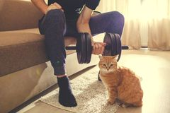 A man goes in for sports at home with dumbbells with a cat stock images