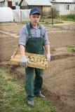 Man going to plant potatoes Stock Photo