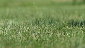 Man golf player hitting ball making half-swing and slicing grass, close-up. Stock footage stock video footage