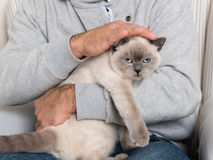 Man and gorgeous pet cat. Man sitting in an armchair, holding his gorgeous pet cat royalty free stock photography