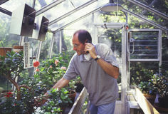 Man in greenhouse on cellphone Stock Images