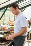 Man in greenhouse putting soil in pot Stock Photography