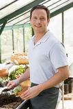 Man in greenhouse putting soil in pot Royalty Free Stock Image