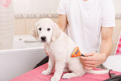 Man grooming of his dog at home Stock Photos
