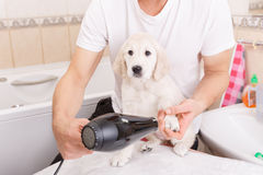 Man grooming of his dog at home Stock Image