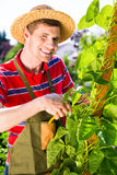 Man growing vegetables Royalty Free Stock Photo