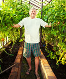 Man grows harvest in the hothouse Stock Photography