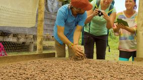 Man Guide Showing Tourists Cocoa Beans. In Ecuador stock video footage