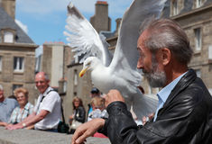 The man and the gull stock images