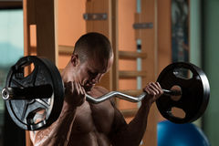 Man In The Gym Exercising Biceps With Barbell. Muscular Man Doing Heavy Weight Exercise For Biceps Stock Photo