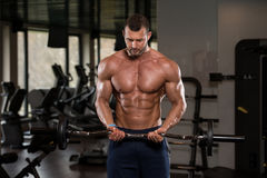 Man In The Gym Exercising Biceps With Barbell. Young Athlete In The Gym Performing Biceps Curls With A Barbell Royalty Free Stock Photo
