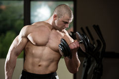 Man In The Gym Exercising Biceps With Dumbbells Royalty Free Stock Images
