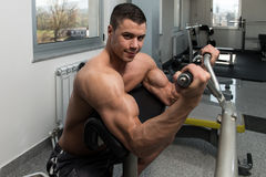 Man In The Gym Exercising Biceps On Machine Stock Image