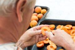 Man halving fresh homegrown apricots Royalty Free Stock Photo