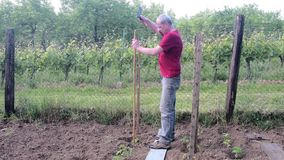 Man hammering into stake. Building of stakes for tomatoes. Gardening concept.  stock video footage