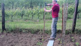 Man hammering into stake. Building of stakes for tomatoes. Gardening concept.  stock video