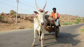 Man HAMPI, INDIA - APRIL 2013: riding ox driven cart stock footage