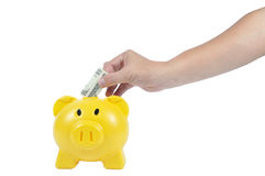 Man hand action with yellow piggy-bank, business concept Stock Image