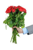 Man hand with bunch of red roses Royalty Free Stock Photos