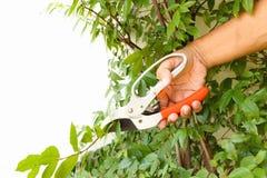 Man hand cutting tree branch Stock Image